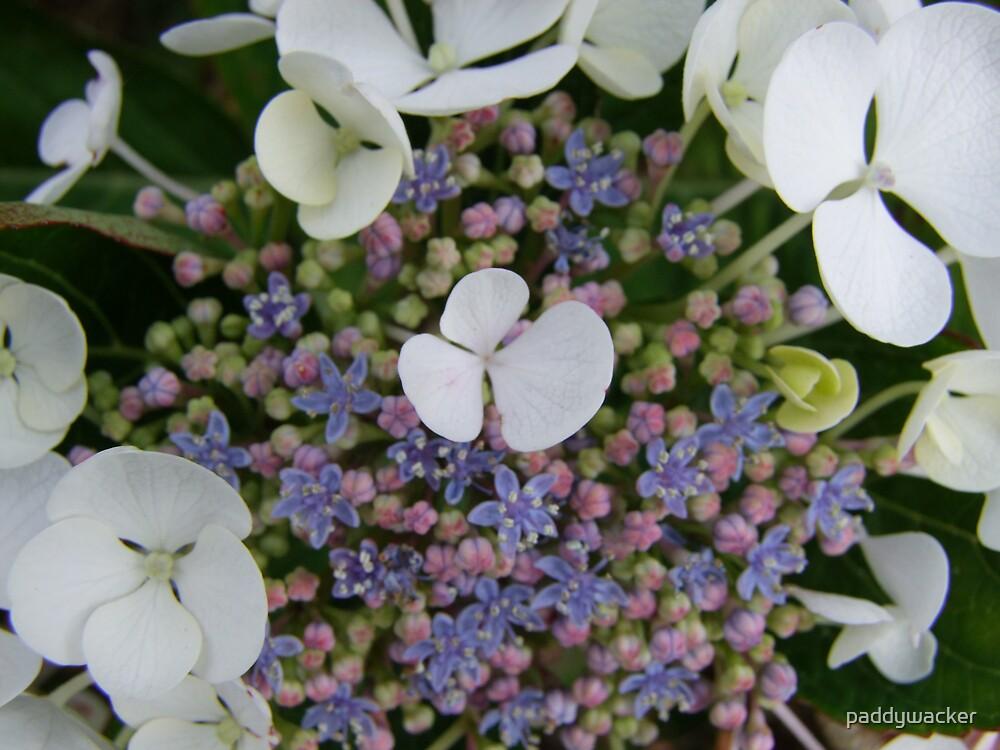 flowers by paddywacker