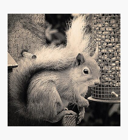Squirrel in the Garden Photographic Print