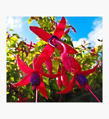 Fucshia Magic Photographic Print