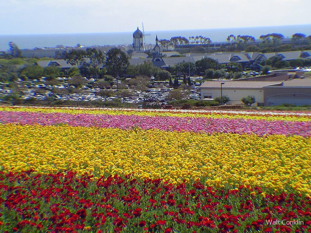 Carlsbad Flower Fields by Walt Conklin