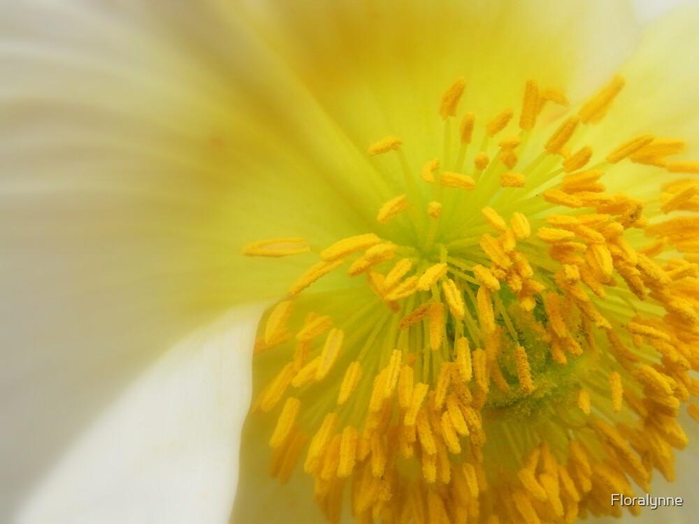 poppy VI by Floralynne