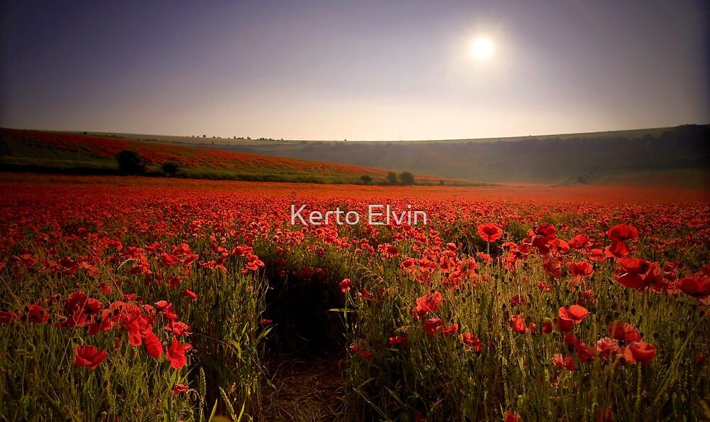 Poppyfield by Kerto Elvin