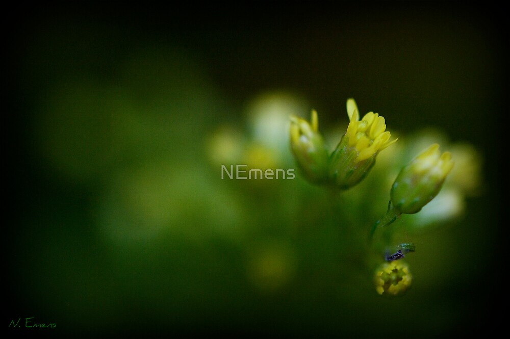 thinking of spring by NEmens
