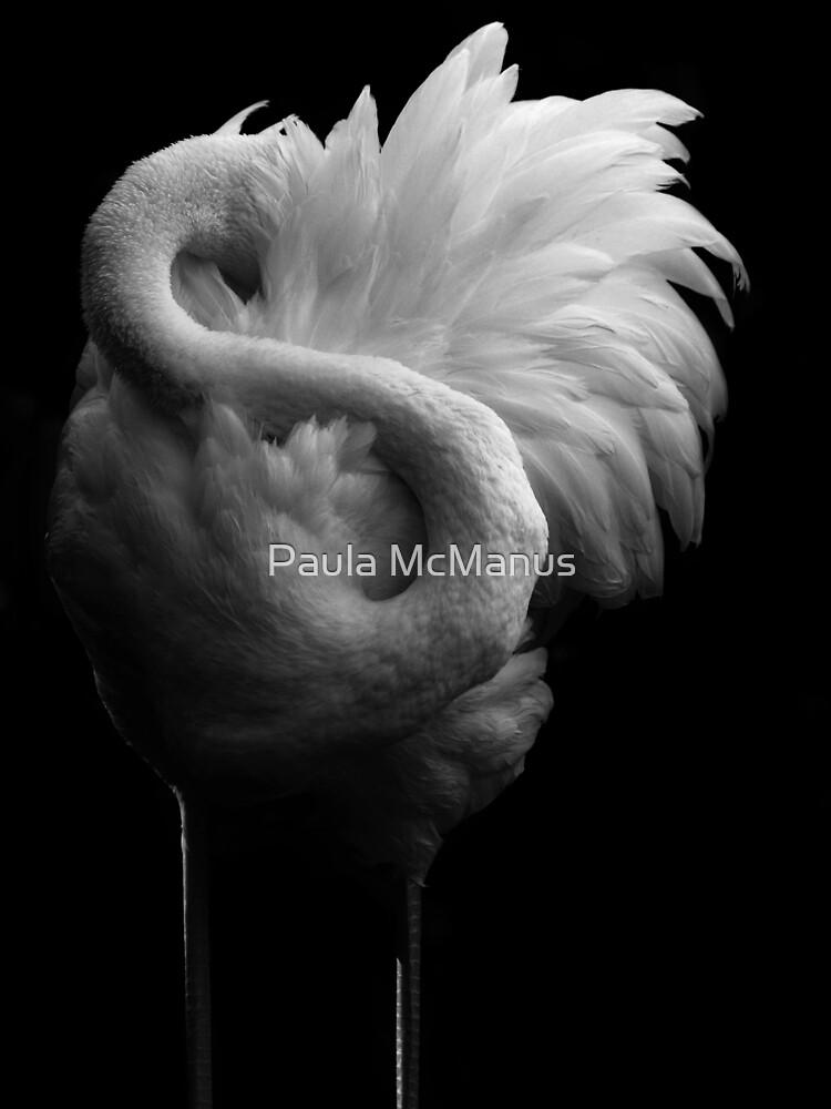 The Shyest Bird by Paula McManus