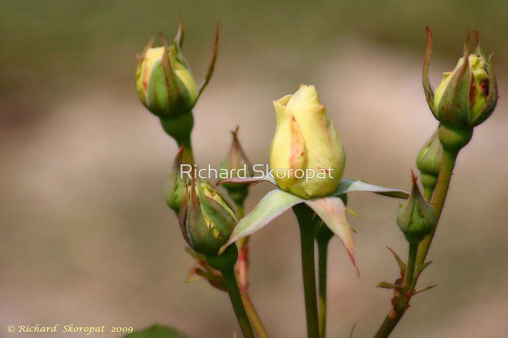 Rose Buds by Richard Skoropat