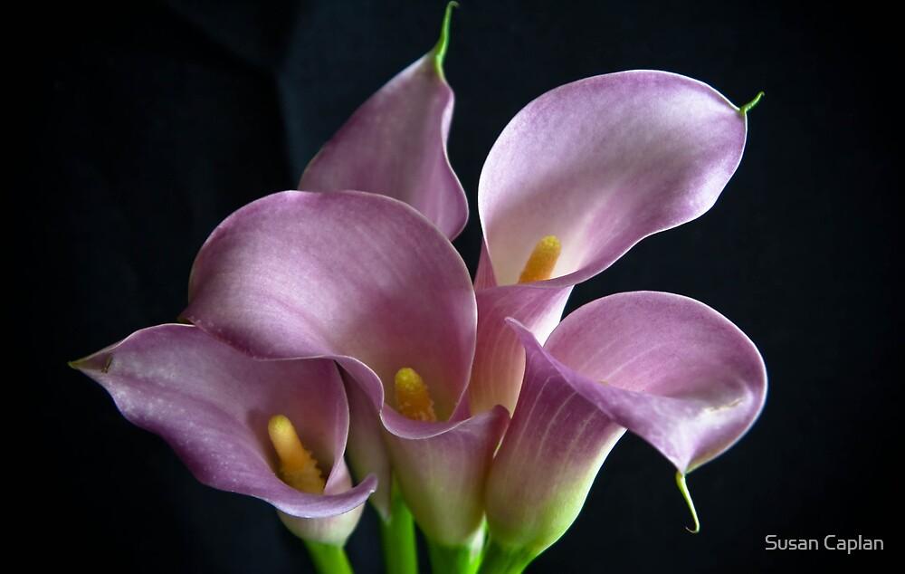 Purple Lust by Susan Caplan