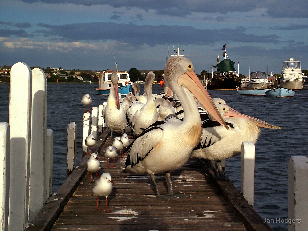 Pelicans Seagulls and Boats Lakes Entrance Victoria Australia by Janette Rodgers