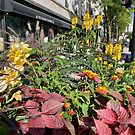 Madison WI Urban Color 2 by rvjames