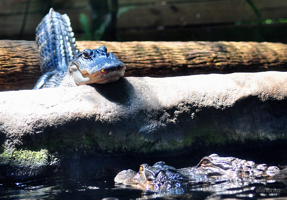 Alligator Conspiracy by alanbrito