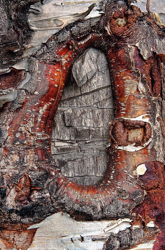 Knot hole at the secret pond by Jeffrey  Sinnock