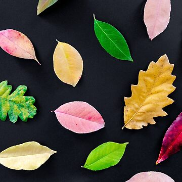 Autumn Fall Beautiful and Colorful Leafs by Maindy