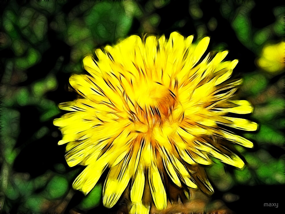 Nothing like the good ole Dandilion!   by maxy