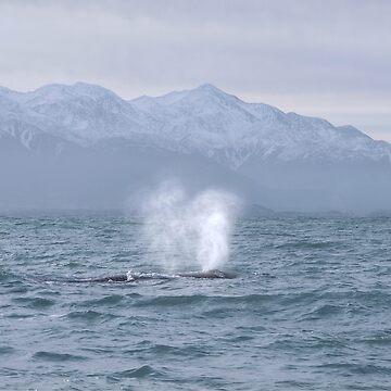 whale watching Kaikoura by PaulaMcManus