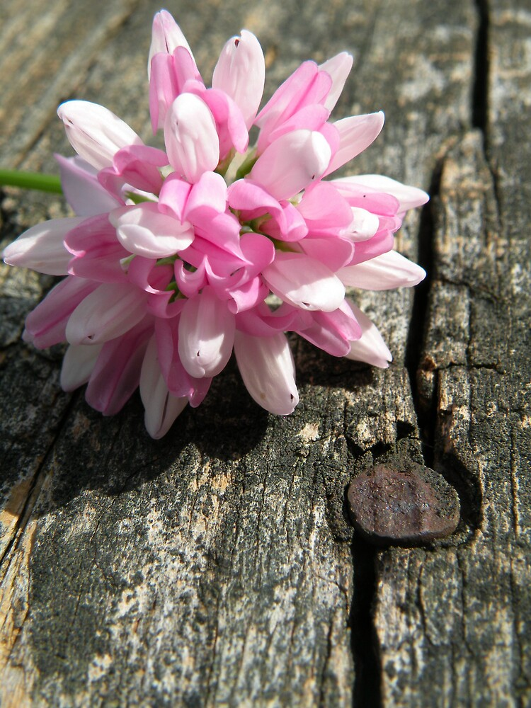 Weathered Wood with Pink by Nokie