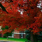 Red Of Fall by Deborah  Benoit