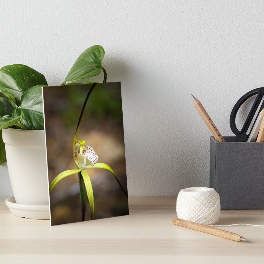 Yellow Spider Orchid Art Board Print