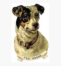 dog 9 Photographic Print