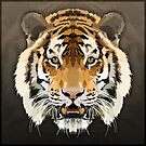 Topographic: Tiger by NoelleMBrooks