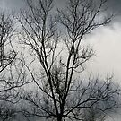 Gloomy day with bare tree by mistyrose