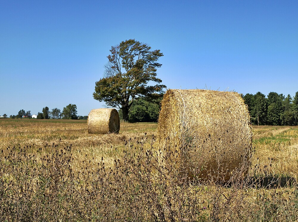 Last Hay harvest by marchello