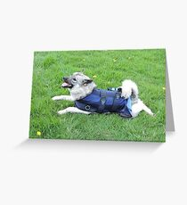 Elkie In A Cool Coat Greeting Card
