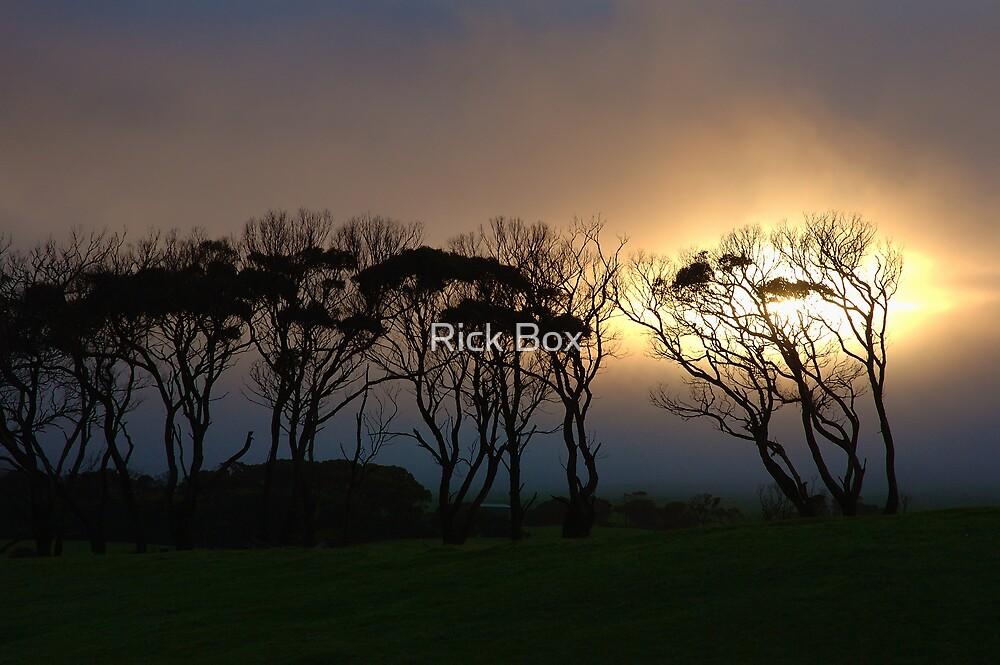 T Tree - Murrawah, Tasmania by Rick Box