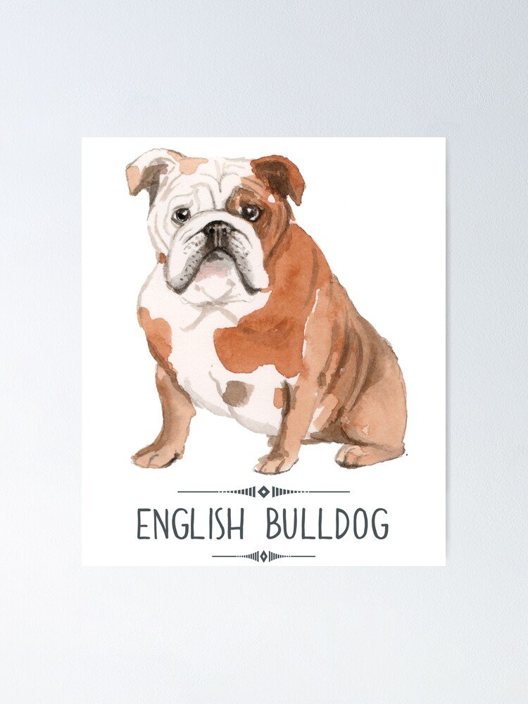 BULLDOGS ENGLISH GLASSES CASE Ideal small gift