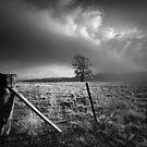Chosen Field by Ben Ryan