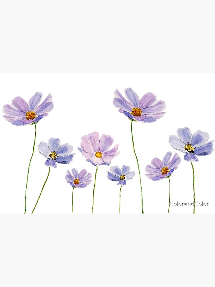 purple cosmos flowers watercolor by ColorandColor