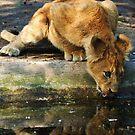 thirsty work by Alan Mattison