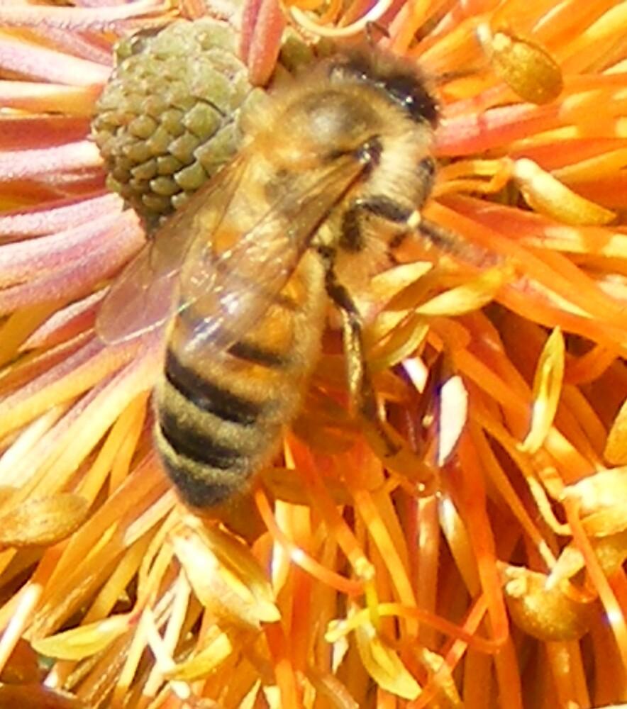 bees -- at Tasmania's Lake Barrington Garden Cafe  by gaylene