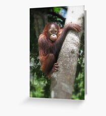 Borneo orangutang #2 Greeting Card