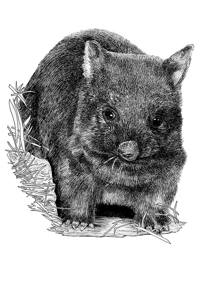 The Wombat by robertemerald