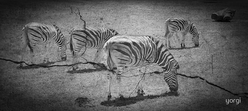 Zebra 2 by yorgi