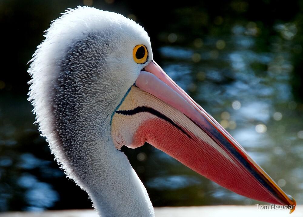 Pelican XIX by Tom Newman