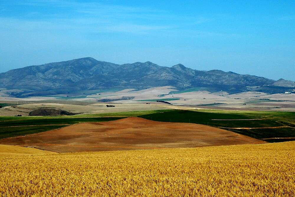 Fields of Gold by serendip