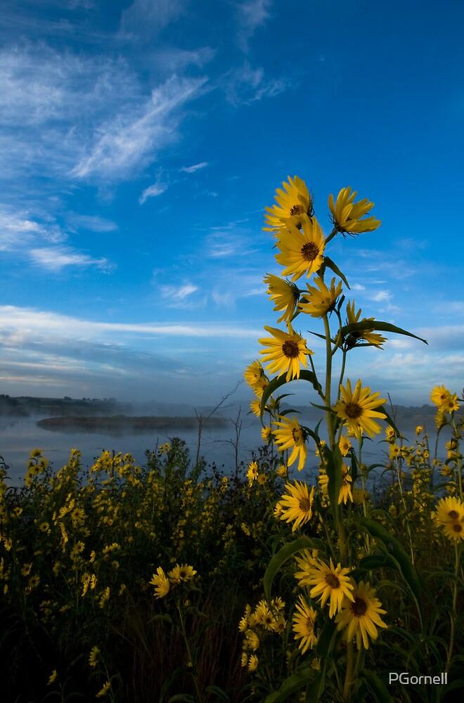 Wild Sunflowers by PGornell