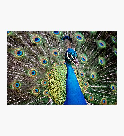 Show Off Photographic Print