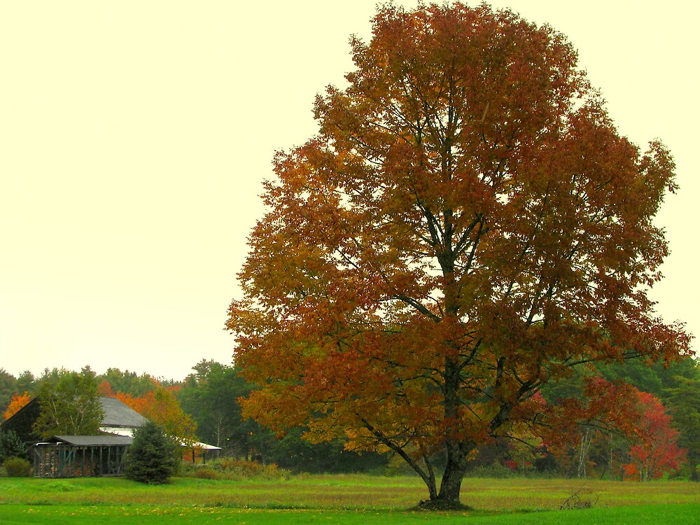 falling softly on farm pasture by Patty Gross