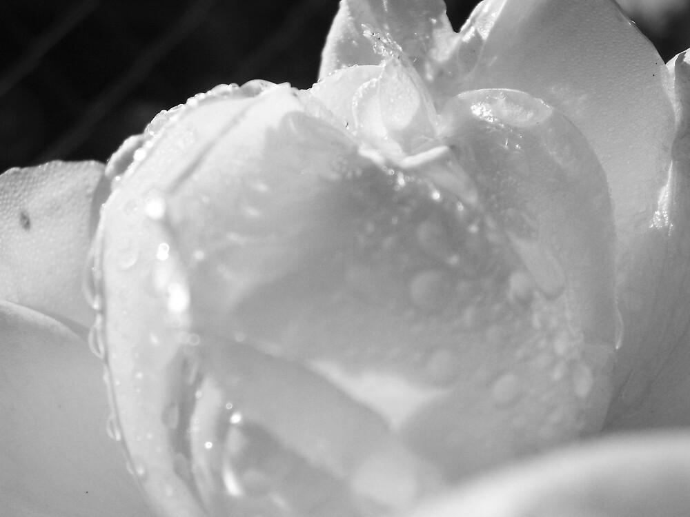 Glisten-Black and White by Jess Mo