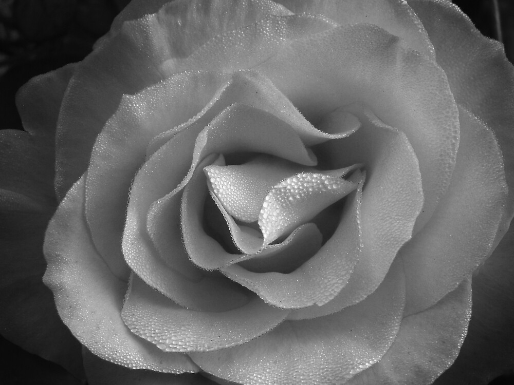 Rose in Pearls V. Black and White by Jess Mo