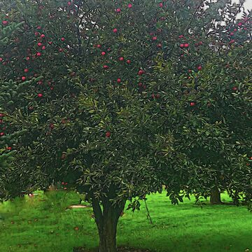 Apple Tree by bloomingvine