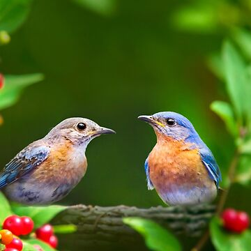 Bluebird Pair by rollosphotos