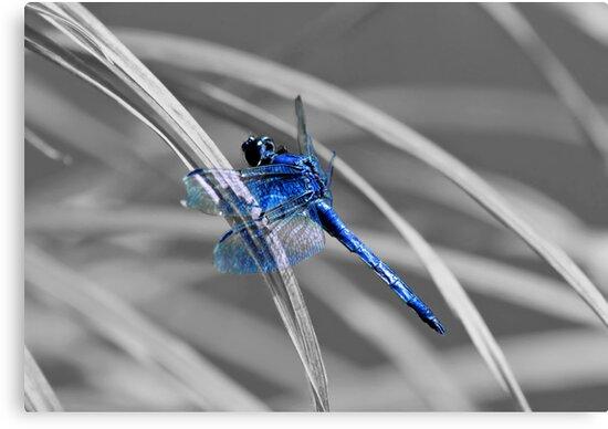 I AM BLUE! by Evelina Kremsdorf