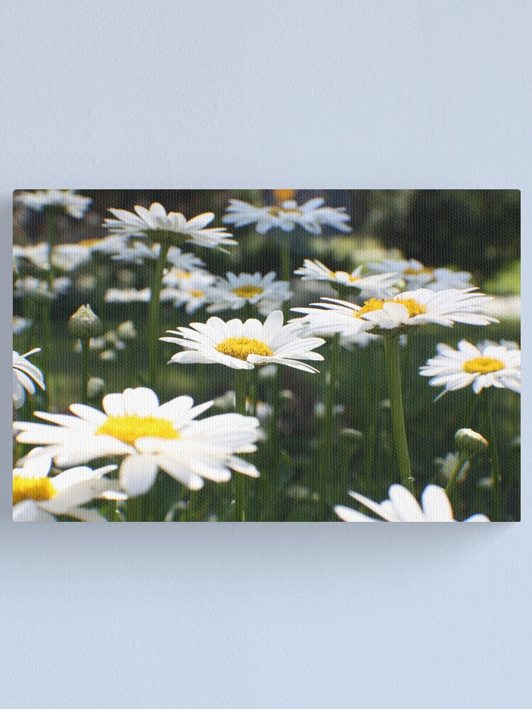 Alternate view of Pushing up Daisies Canvas Print