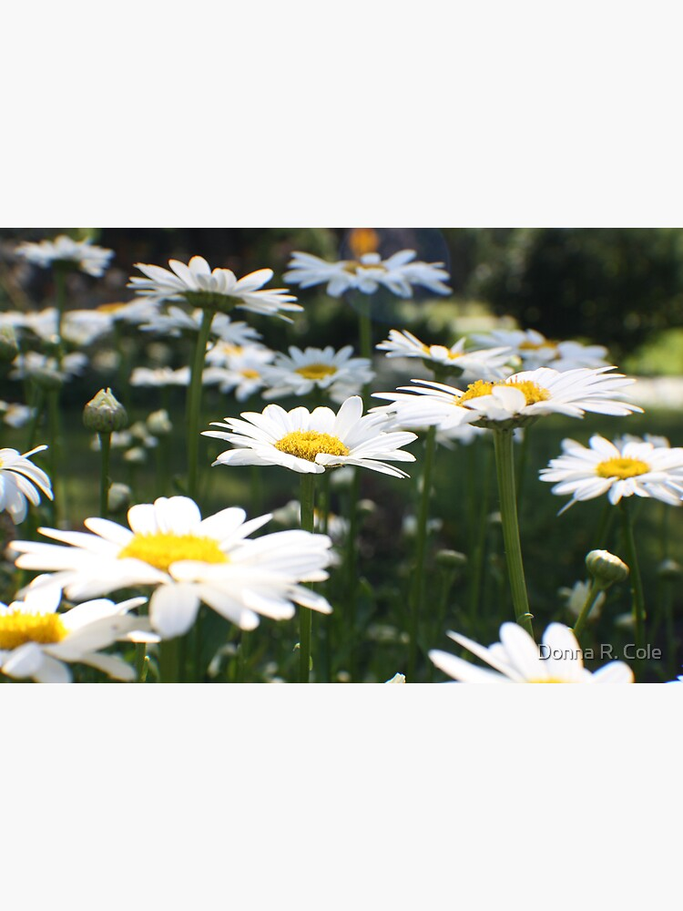 Pushing up Daisies by alwaysdrc