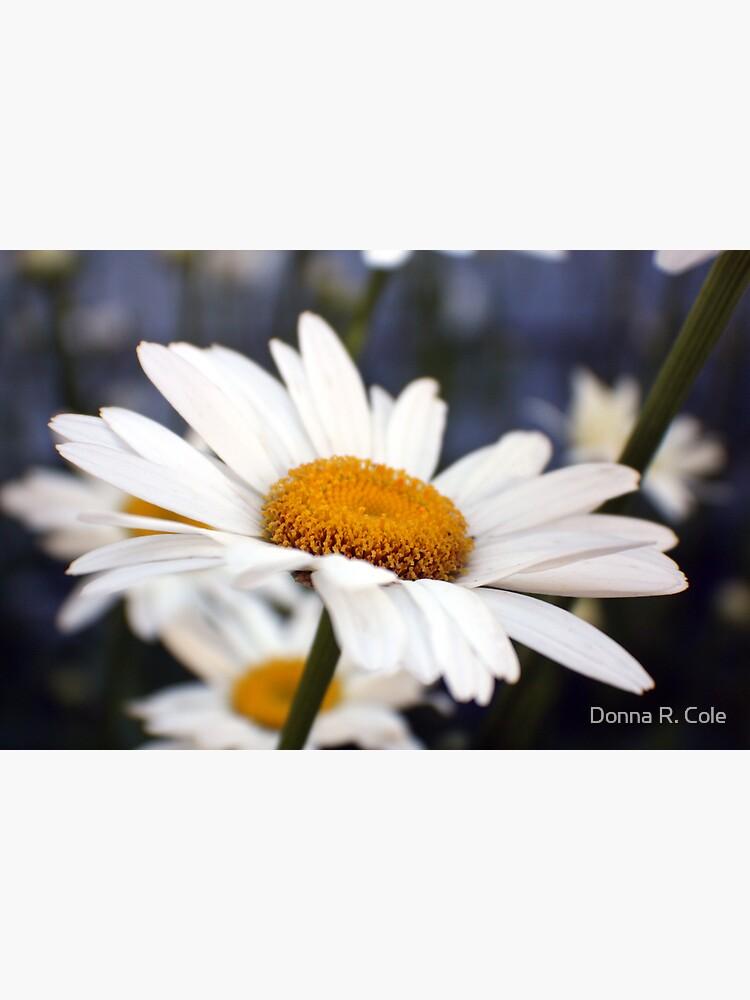Upsy-Daisy by alwaysdrc