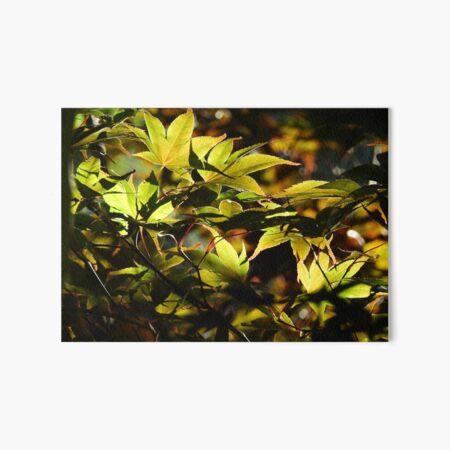 Illuminated Leaves Art Board Print