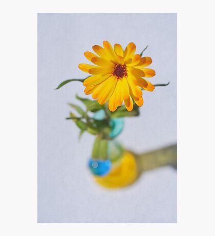 Marigold Ballerina Photographic Print