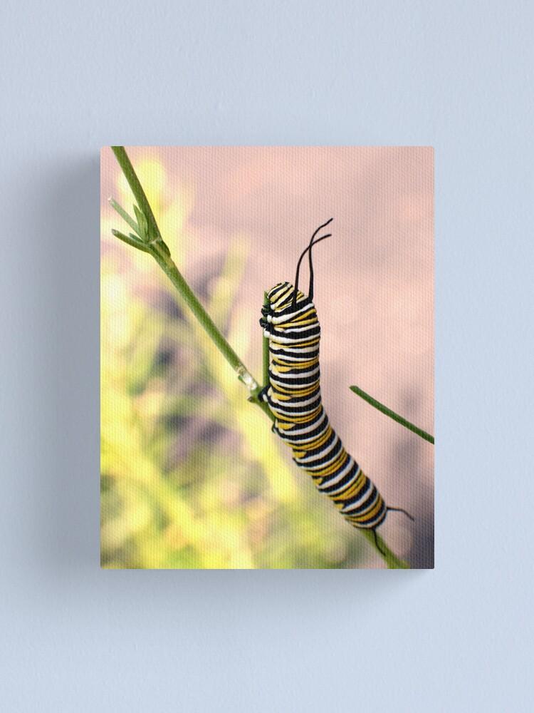 Alternate view of Monarch Caterpillar - 19 Canvas Print